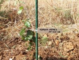 37-109-08 Adrian Pérez