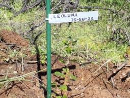 35-58-32 LeoLuna