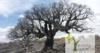 Planta un Quercus a vista de pájaro