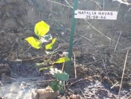 35-58-44 Natalia Navas