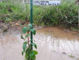 30-64-30 Salvador Tapia