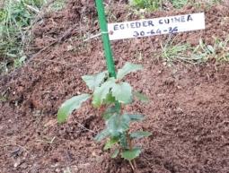 30-64-36 Egieder Guinea